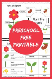 preschool sciences plants